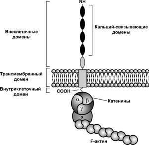 мужская потенция народные средства Иваново