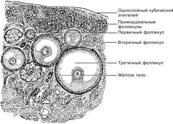 download Англо русский толковый научно технический словарь, Том 1 2008