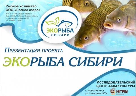 Презентация проекта Экорыба Сибири